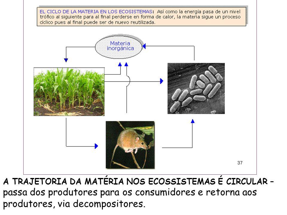 A TRAJETORIA DA MATÉRIA NOS ECOSSISTEMAS É CIRCULAR – passa dos produtores para os consumidores e retorna aos produtores, via decompositores.