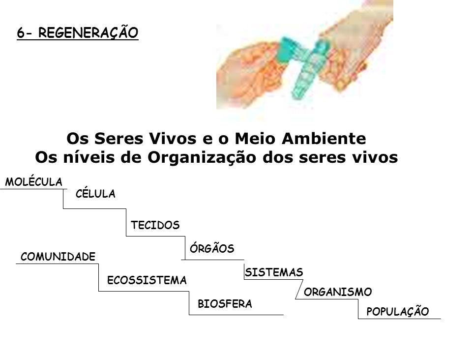 6- REGENERAÇÃO Os Seres Vivos e o Meio Ambiente Os níveis de Organização dos seres vivos. MOLÉCULA.