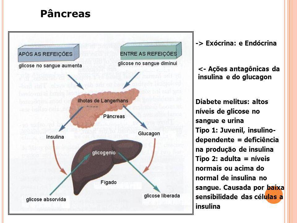 Pâncreas -> Exócrina: e Endócrina