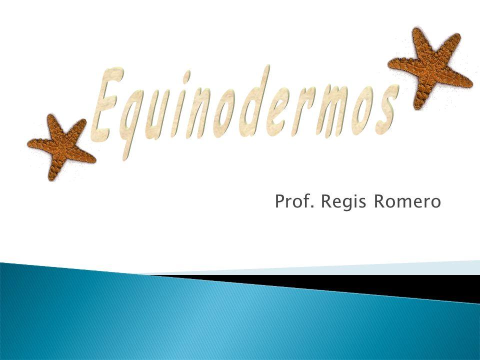 Equinodermos Prof. Regis Romero