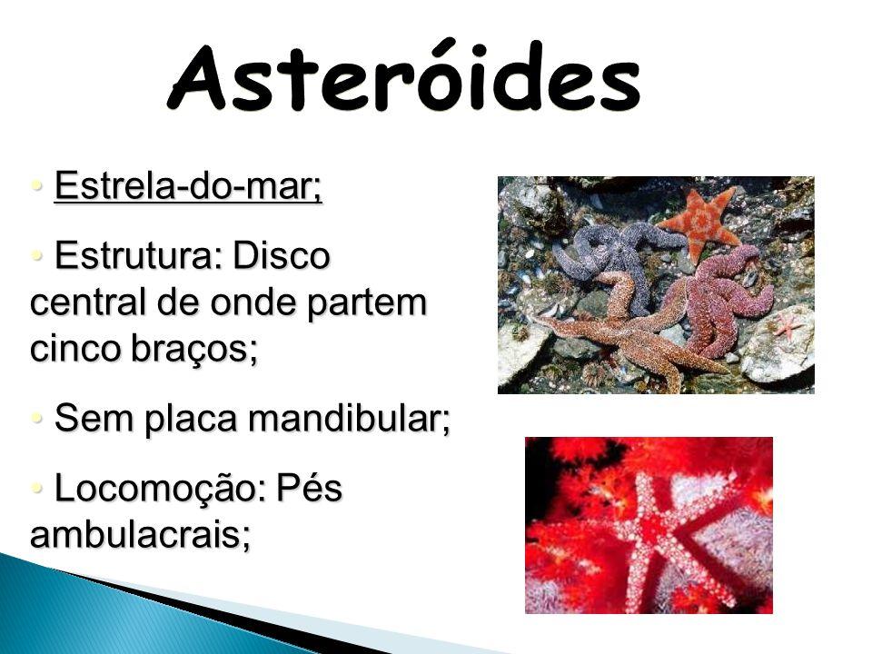 Asteróides Estrela-do-mar;