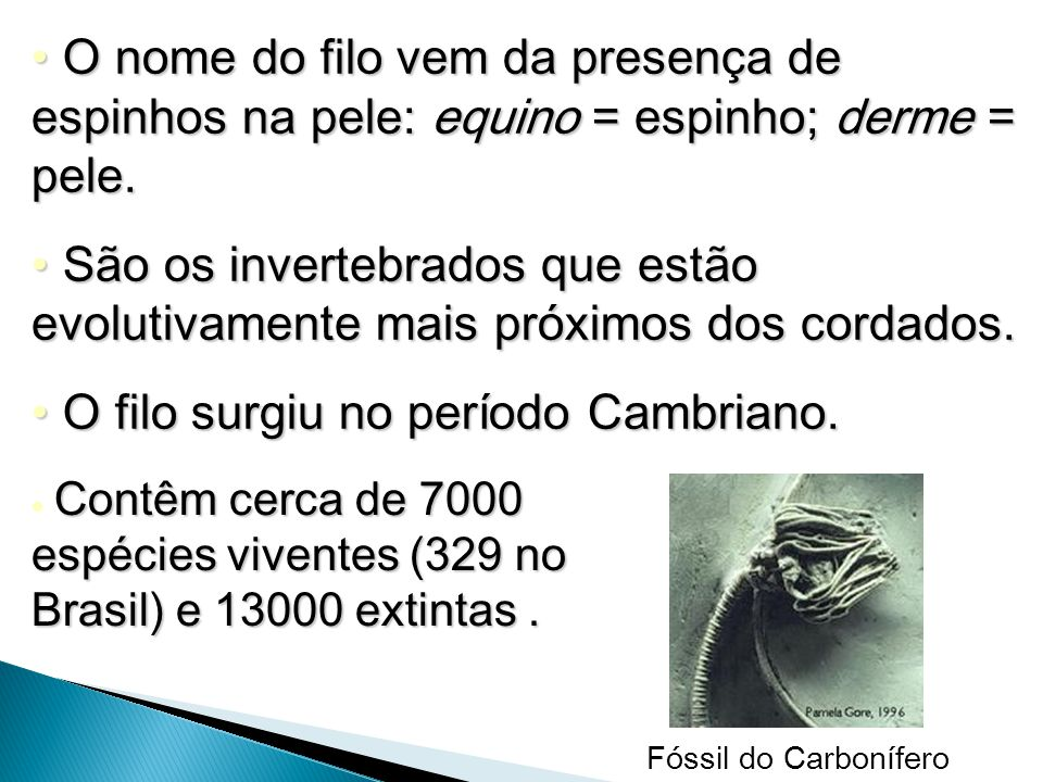 O filo surgiu no período Cambriano.
