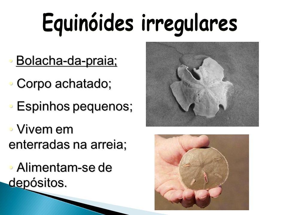 Equinóides irregulares