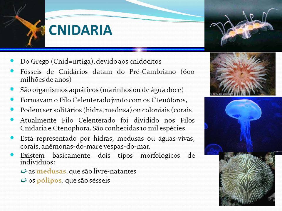 FILO CNIDARIA Do Grego (Cnid=urtiga), devido aos cnidócitos