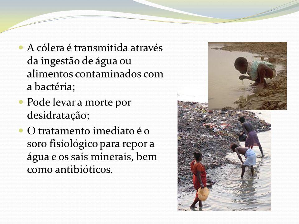 A cólera é transmitida através da ingestão de água ou alimentos contaminados com a bactéria;