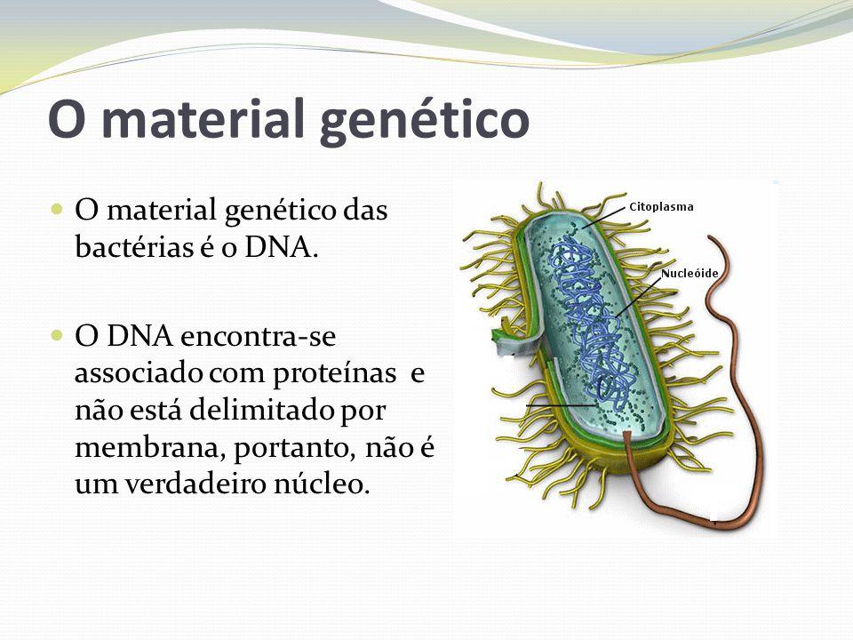 O material genético O material genético das bactérias é o DNA.