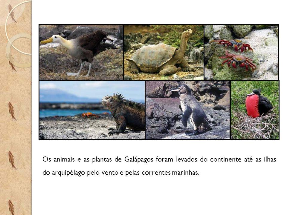 Os animais e as plantas de Galápagos foram levados do continente até as ilhas do arquipélago pelo vento e pelas correntes marinhas.
