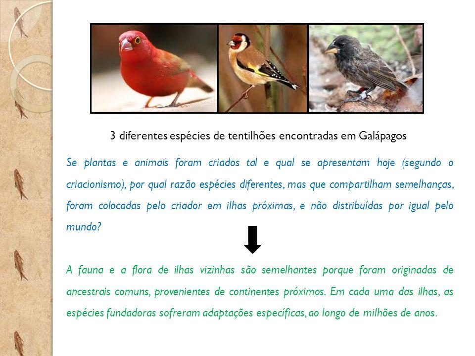 3 diferentes espécies de tentilhões encontradas em Galápagos