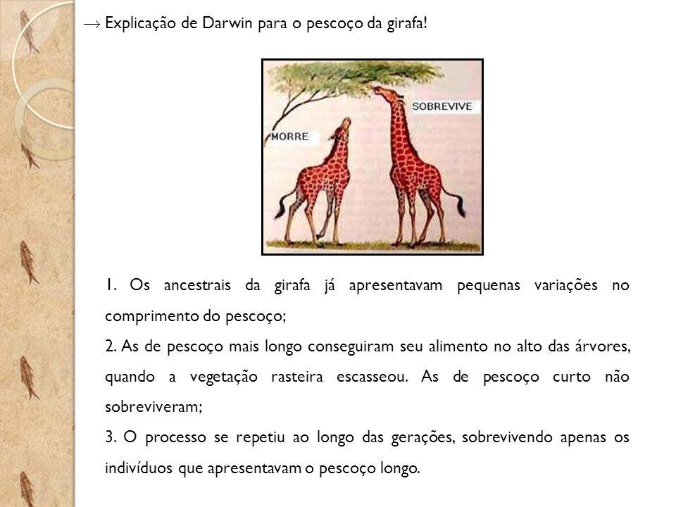  Explicação de Darwin para o pescoço da girafa!