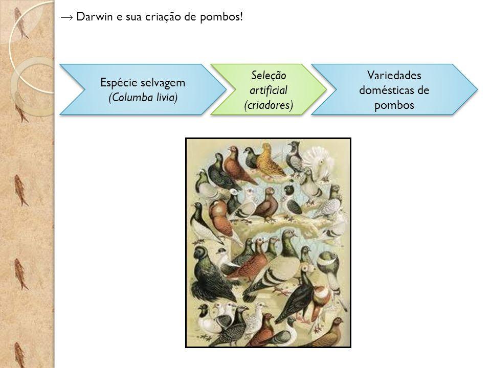  Darwin e sua criação de pombos!