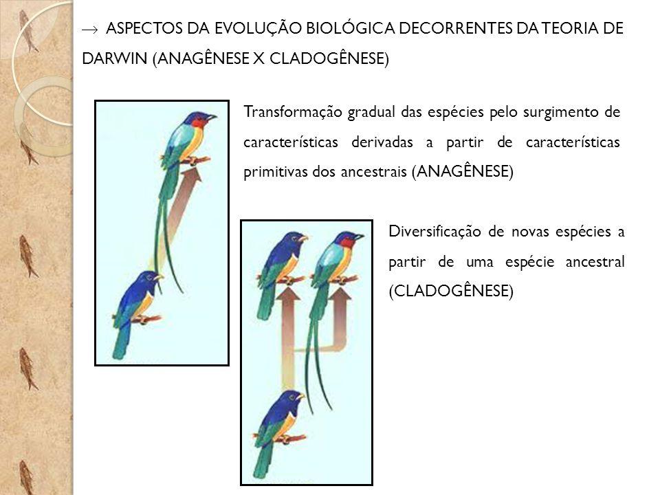  ASPECTOS DA EVOLUÇÃO BIOLÓGICA DECORRENTES DA TEORIA DE DARWIN (ANAGÊNESE X CLADOGÊNESE)