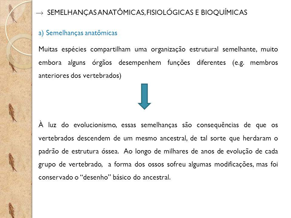  SEMELHANÇAS ANATÔMICAS, FISIOLÓGICAS E BIOQUÍMICAS