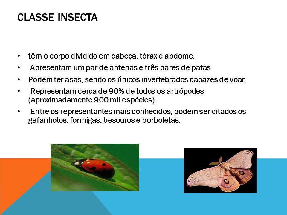 CLASSE INSECTA têm o corpo dividido em cabeça, tórax e abdome.