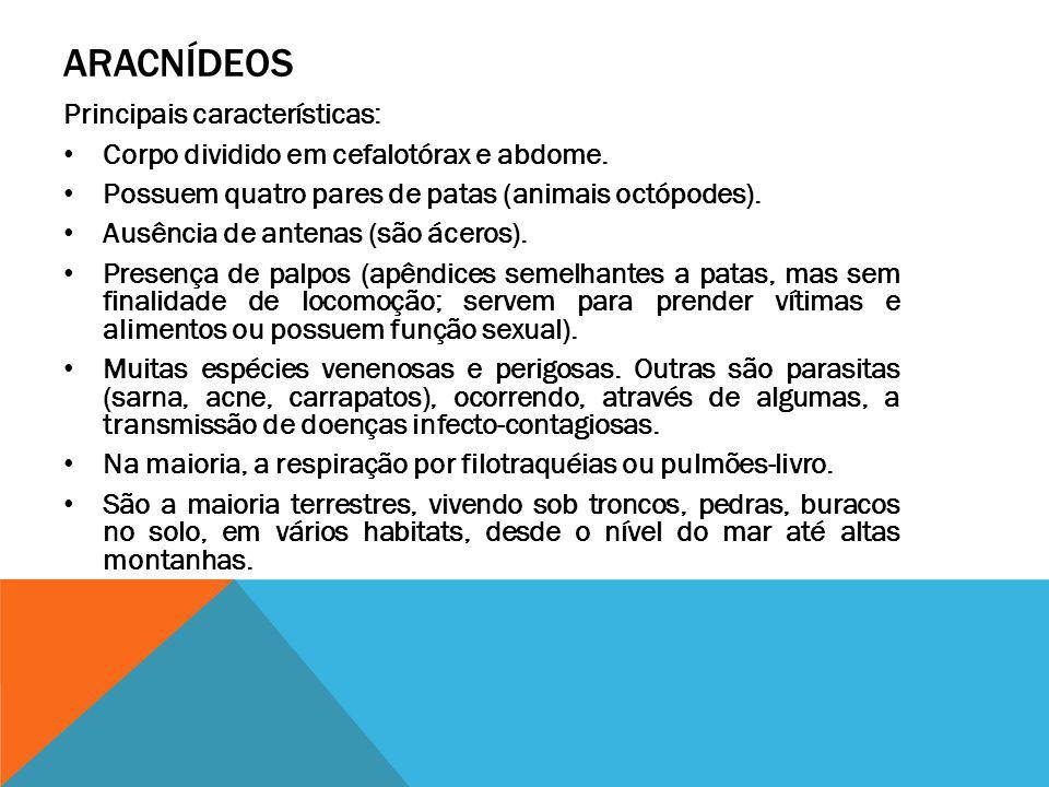 ARACNÍDEOS Principais características: