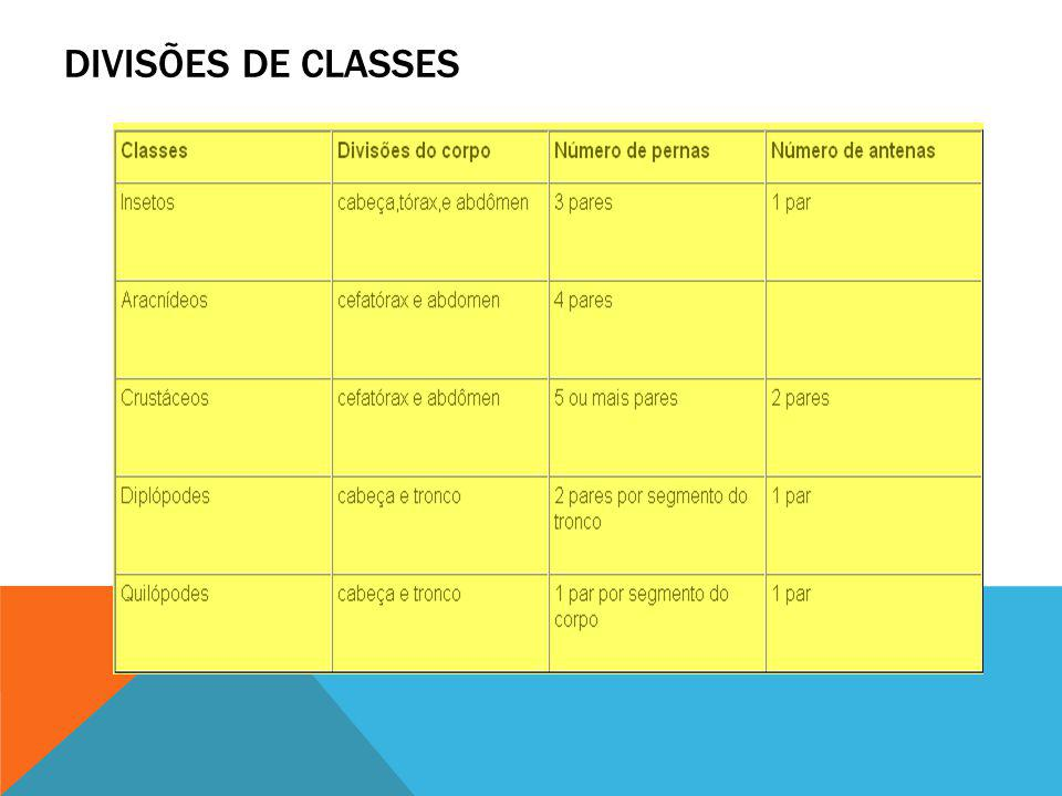 DIVISÕES DE CLASSES
