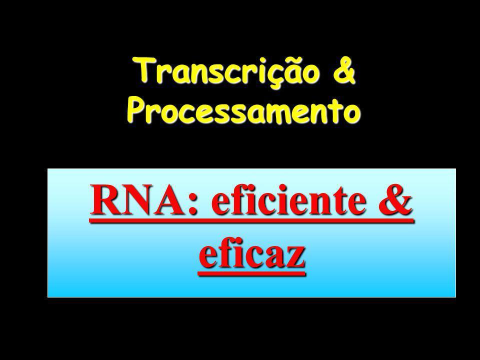 Transcrição & Processamento