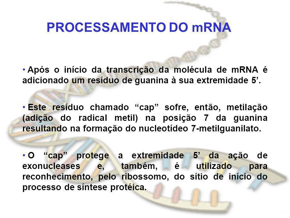 PROCESSAMENTO DO mRNA Após o início da transcrição da molécula de mRNA é adicionado um resíduo de guanina à sua extremidade 5'.