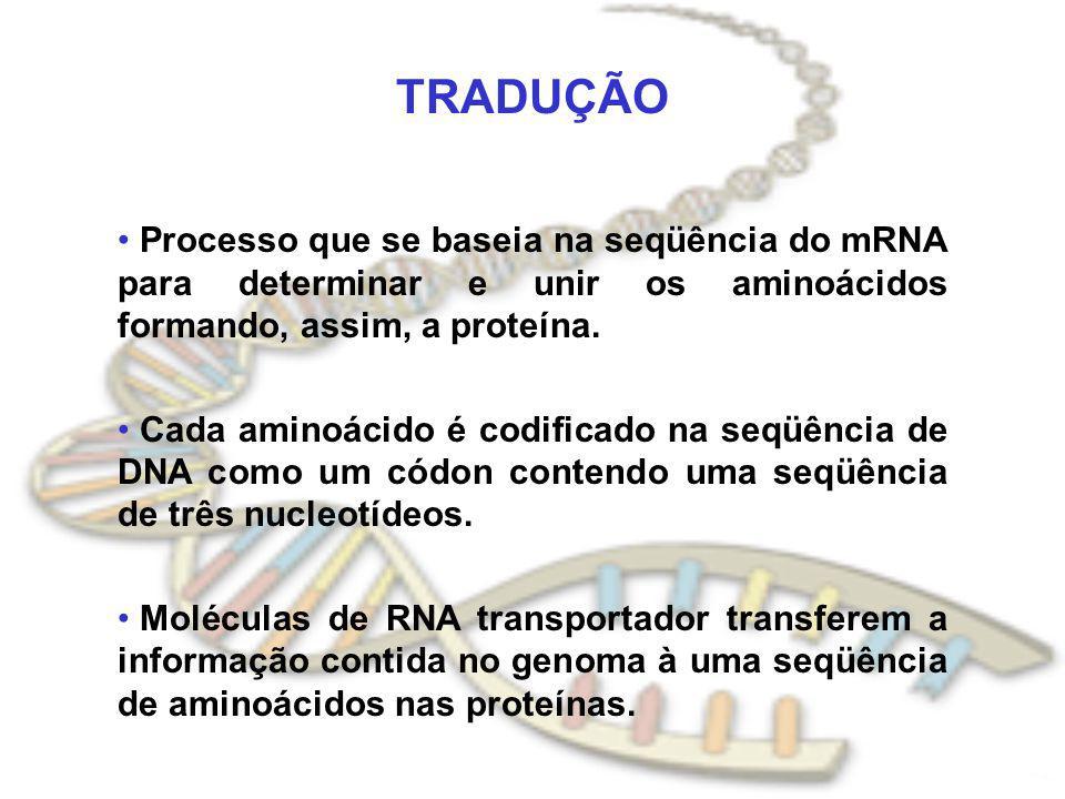 TRADUÇÃO Processo que se baseia na seqüência do mRNA para determinar e unir os aminoácidos formando, assim, a proteína.
