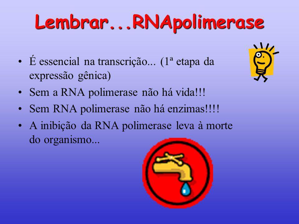 Lembrar...RNApolimerase