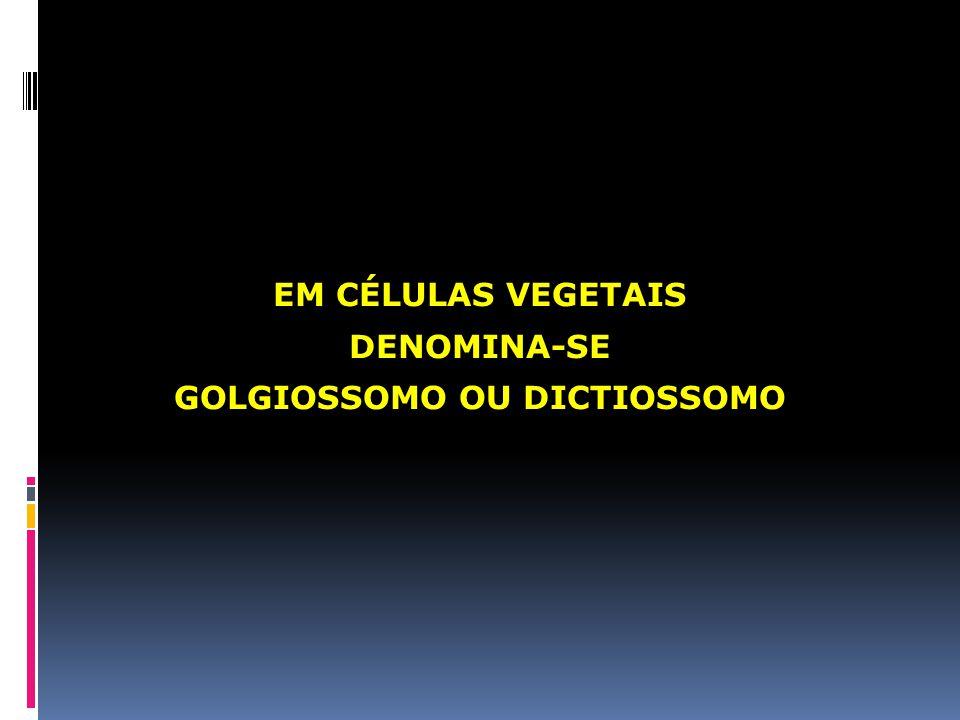 GOLGIOSSOMO OU DICTIOSSOMO
