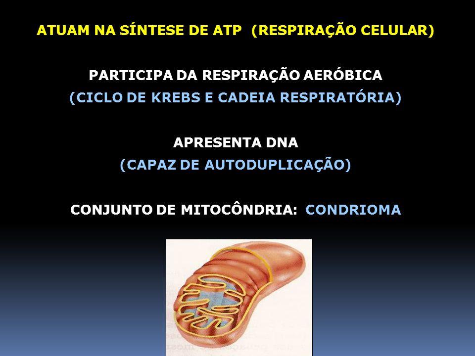 ATUAM NA SÍNTESE DE ATP (RESPIRAÇÃO CELULAR)