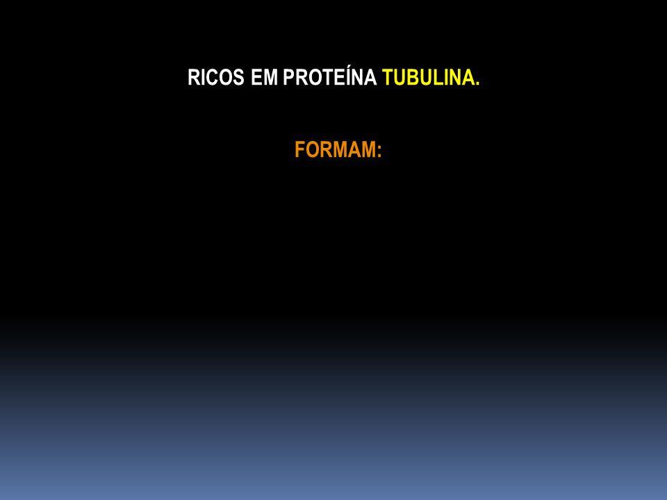 RICOS EM PROTEÍNA TUBULINA.