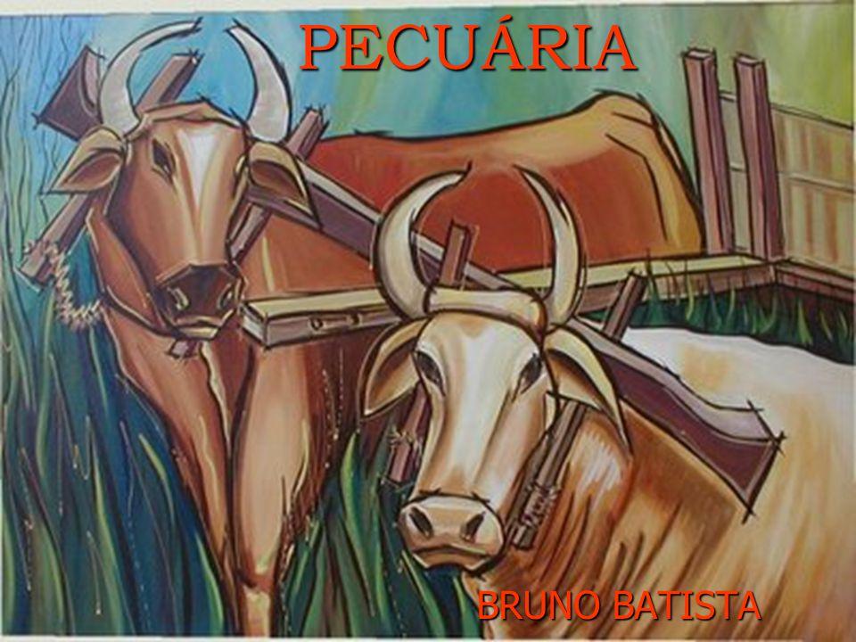 PECUÁRIA BRUNO BATISTA