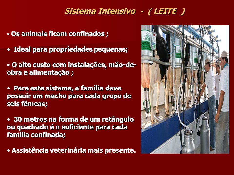 Sistema Intensivo - ( LEITE )