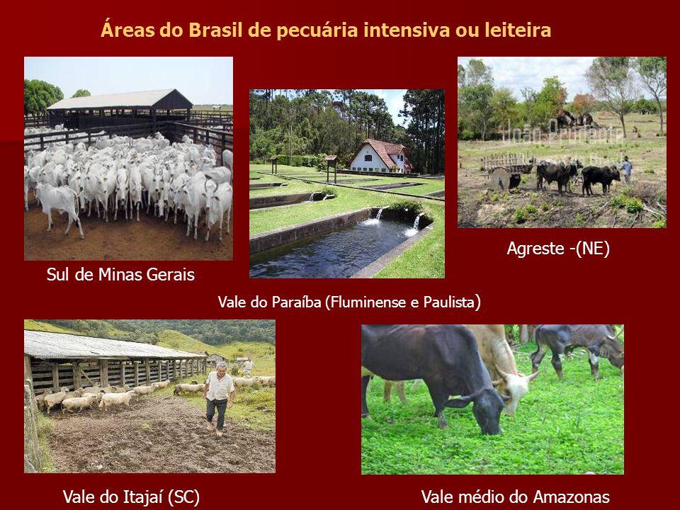 Áreas do Brasil de pecuária intensiva ou leiteira