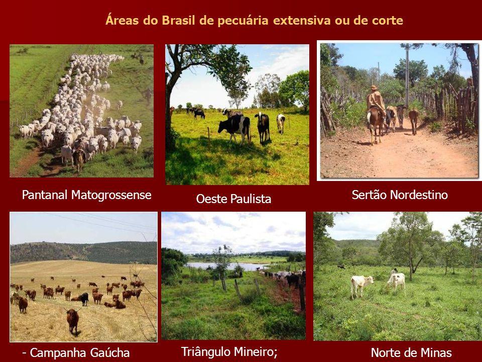 Áreas do Brasil de pecuária extensiva ou de corte