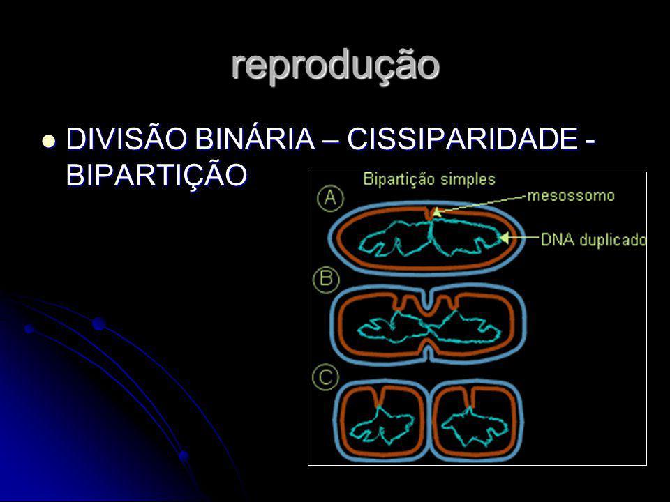 reprodução DIVISÃO BINÁRIA – CISSIPARIDADE - BIPARTIÇÃO