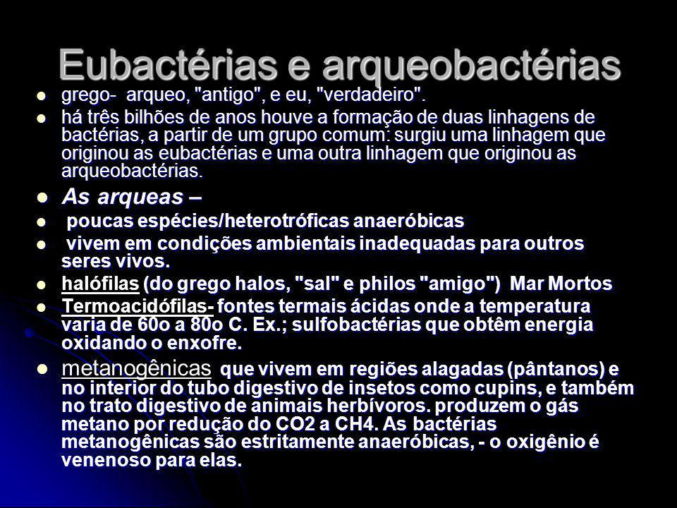 Eubactérias e arqueobactérias
