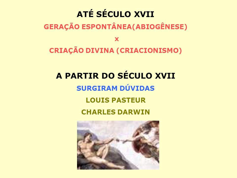 GERAÇÃO ESPONTÂNEA(ABIOGÊNESE) CRIAÇÃO DIVINA (CRIACIONISMO)