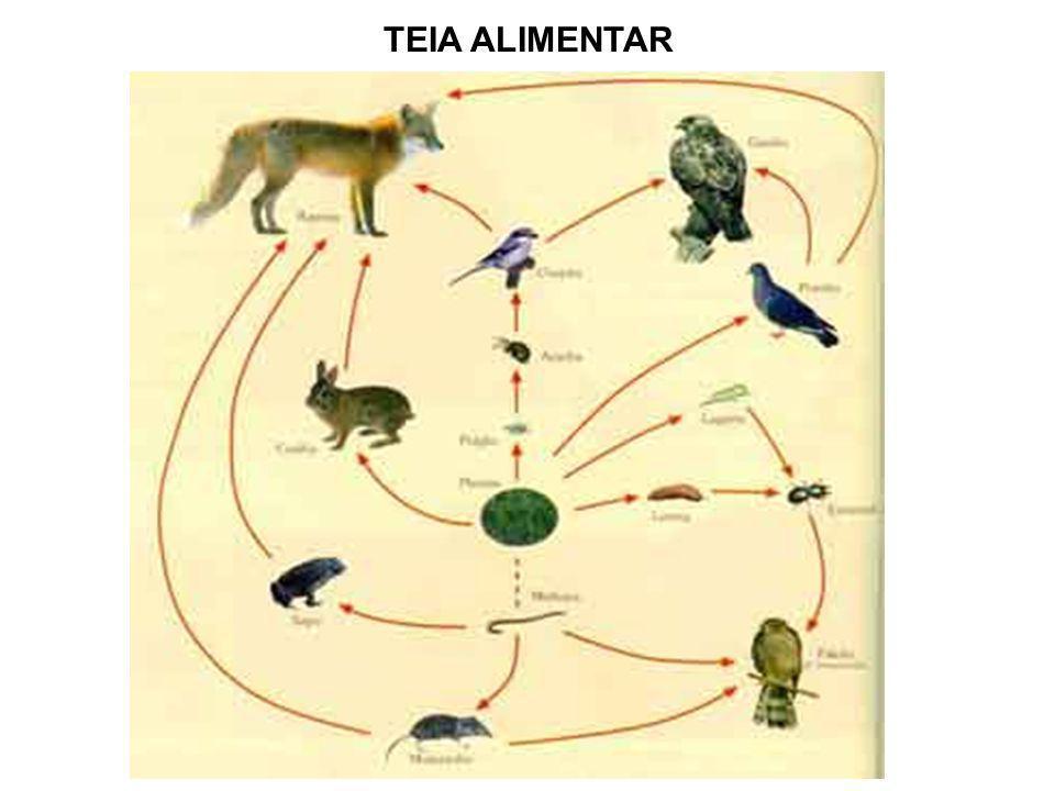 TEIA ALIMENTAR