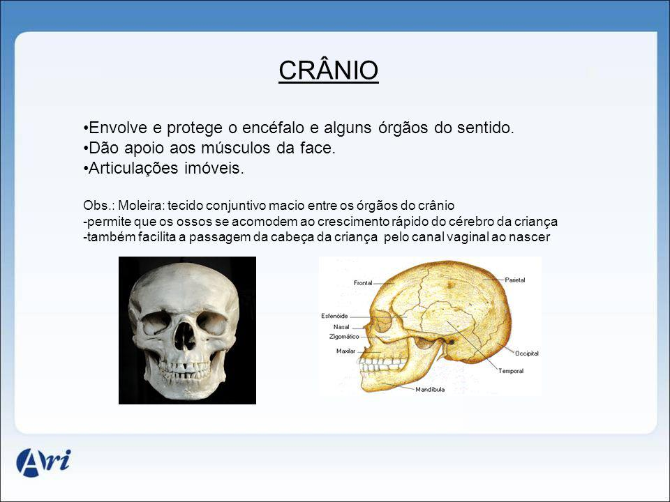 CRÂNIO Envolve e protege o encéfalo e alguns órgãos do sentido.