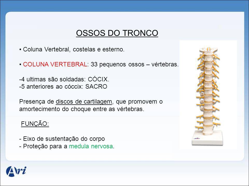 OSSOS DO TRONCO Coluna Vertebral, costelas e esterno.