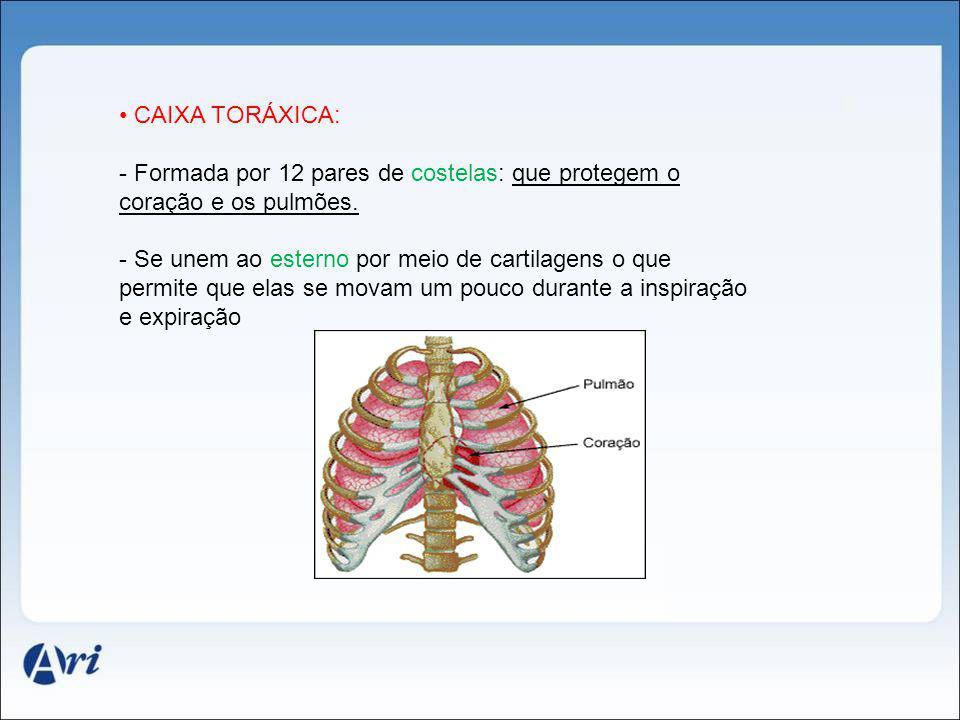 CAIXA TORÁXICA: Formada por 12 pares de costelas: que protegem o coração e os pulmões.