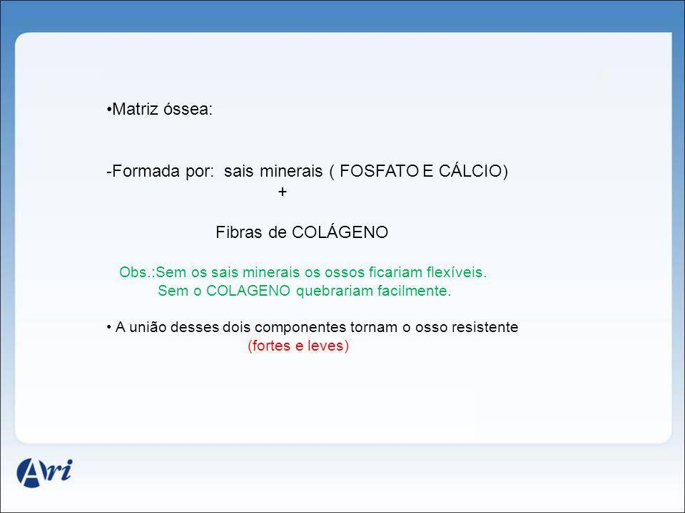Formada por: sais minerais ( FOSFATO E CÁLCIO) + Fibras de COLÁGENO