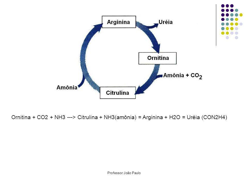 Ornitina + CO2 + NH3 ---> Citrulina + NH3(amônia) = Arginina + H2O = Uréia (CON2H4)