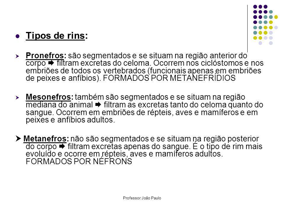 Tipos de rins: