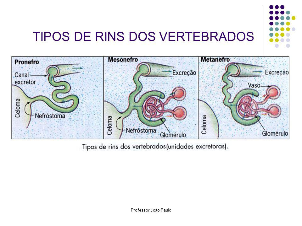 TIPOS DE RINS DOS VERTEBRADOS