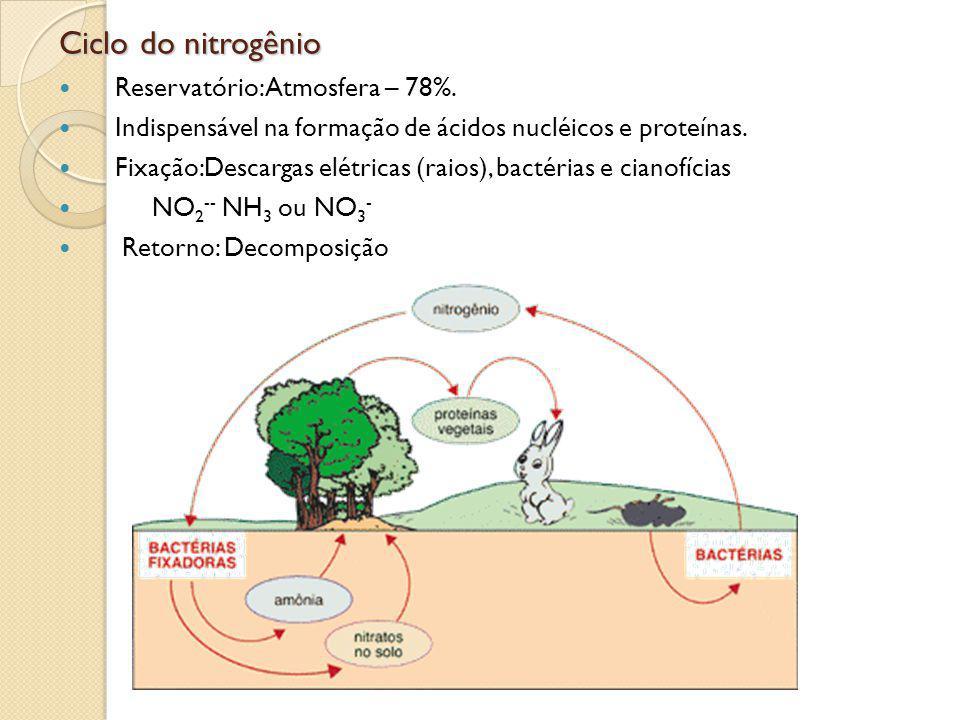 Ciclo do nitrogênio Reservatório: Atmosfera – 78%.