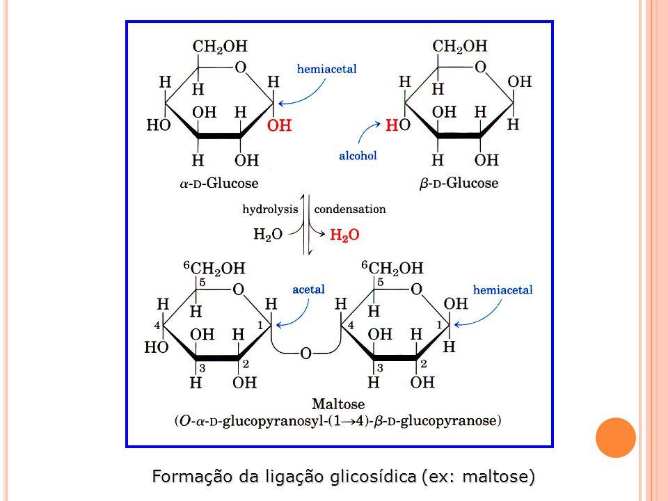 Formação da ligação glicosídica (ex: maltose)