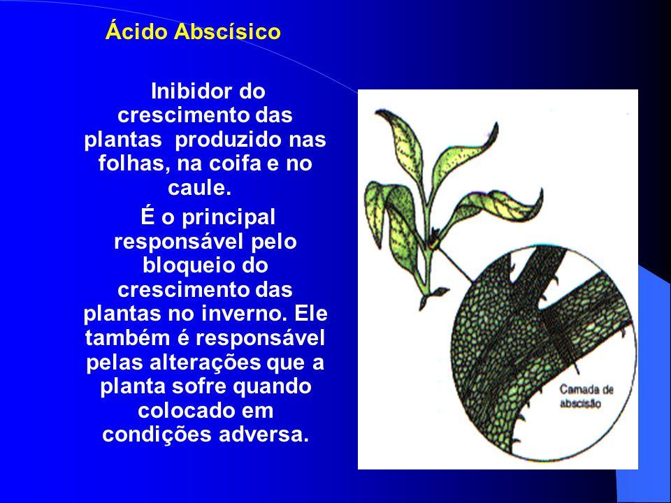 Ácido Abscísico Inibidor do crescimento das plantas produzido nas folhas, na coifa e no caule.