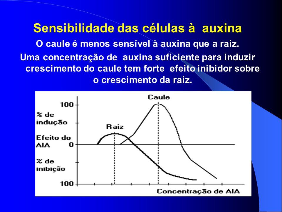 Sensibilidade das células à auxina