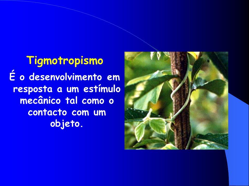Tigmotropismo É o desenvolvimento em resposta a um estímulo mecânico tal como o contacto com um objeto.