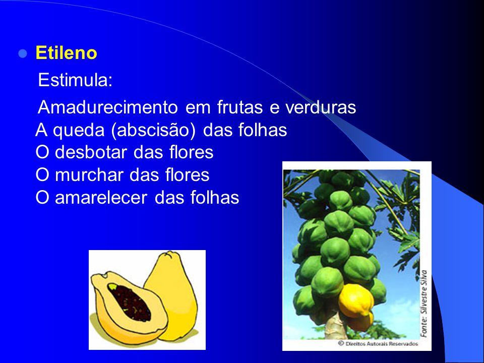 Etileno Estimula: