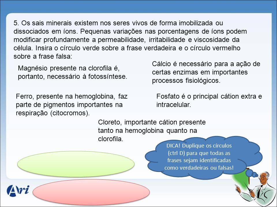 Magnésio presente na clorofila é, portanto, necessário à fotossíntese.