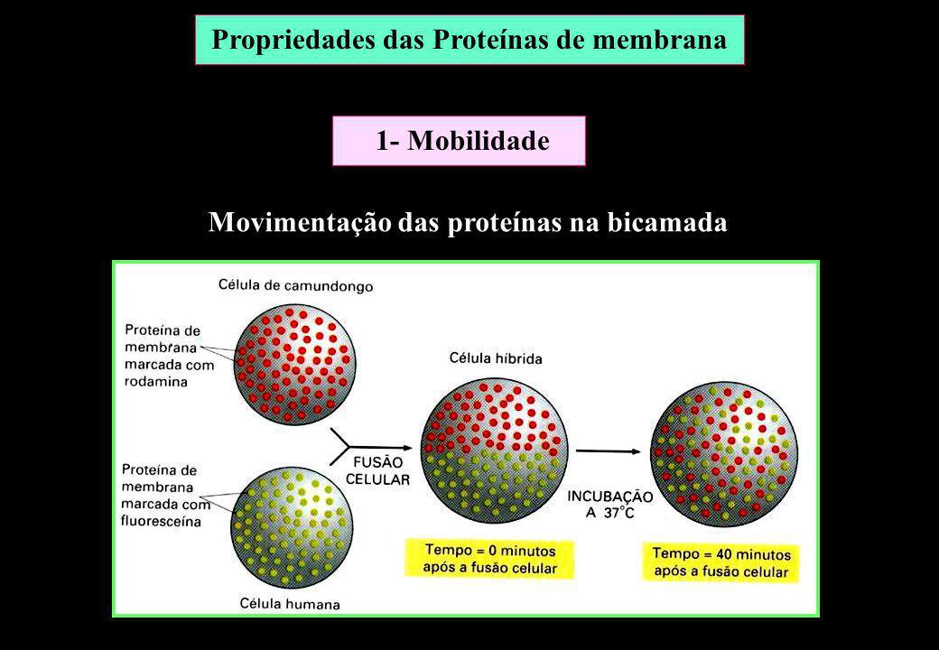 Propriedades das Proteínas de membrana