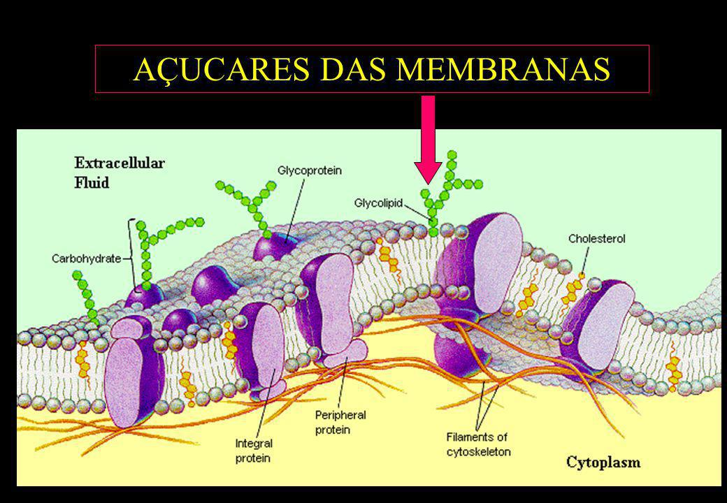 AÇUCARES DAS MEMBRANAS